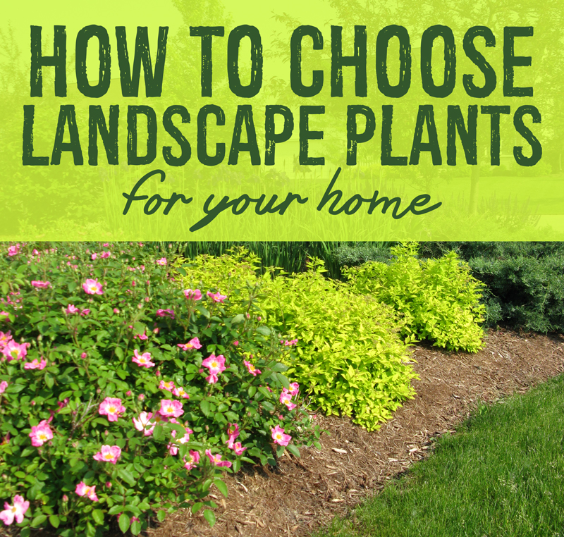 Choose landscape plants