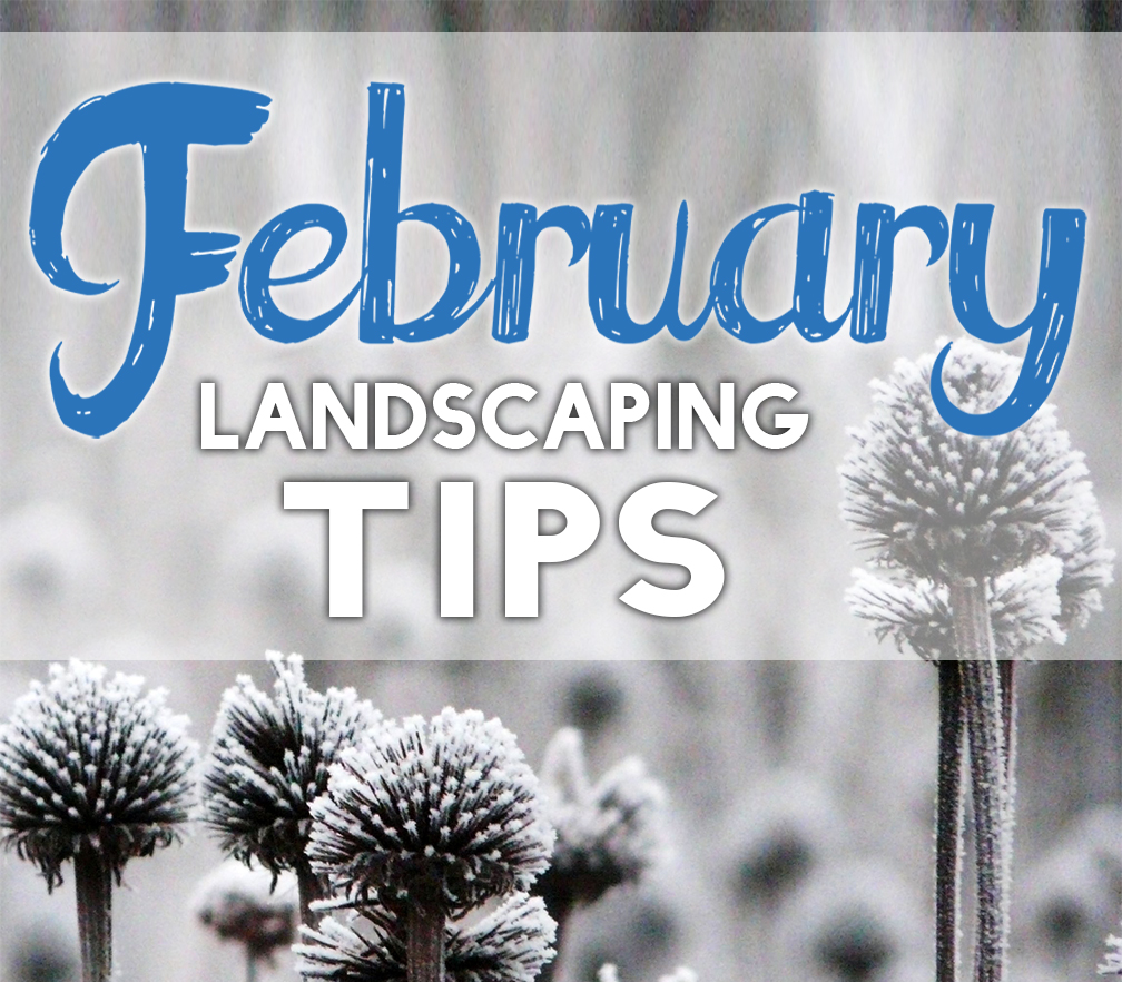 February Landscaping Tips