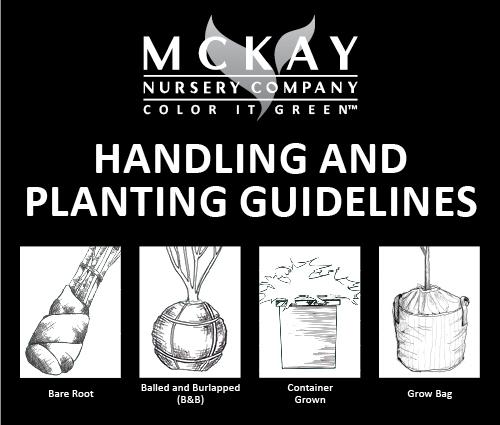 Handling & Planting Guidelines