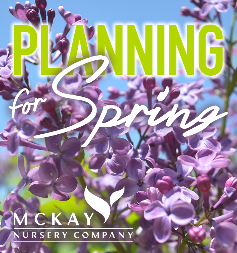 Planning for Spring
