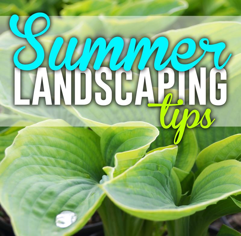 summer landscaping